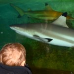 2014-02-27-enfants parc requins 176